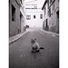 Kitty by Salva G.