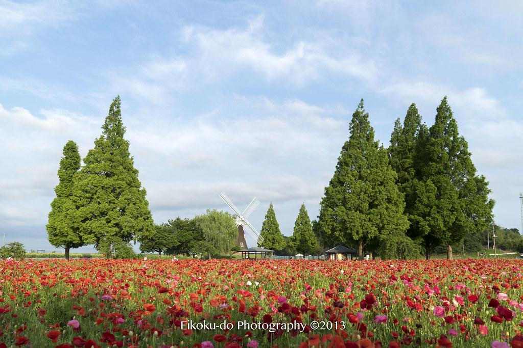 ポピー・あけぼの山農業公園