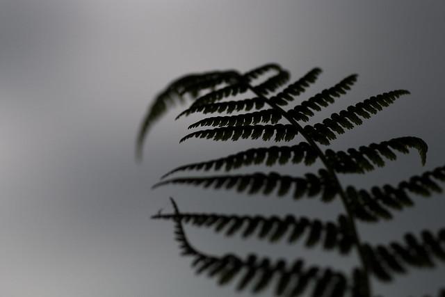 Fern silhouette, Canon EOS 70D, Tamron 90mm f/2.8