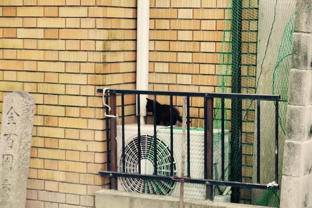 Today's Cat@2017-05-31