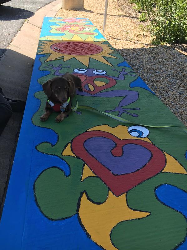 Buddy enjoying the art