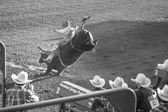 20170621_F0001: Watching bull riding