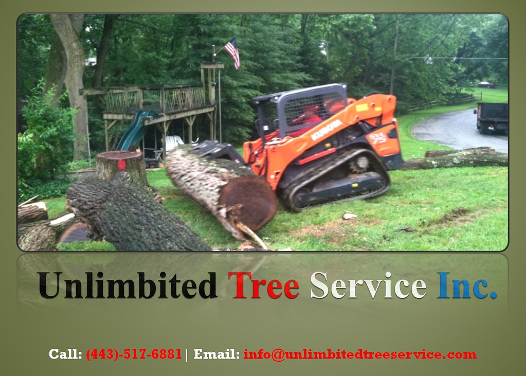 Best Tree Care and Tree Service Baltimore, Maryland