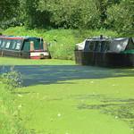 Greenery in Preston
