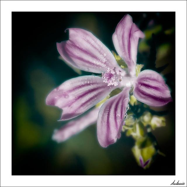 Las flores también lloran