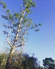 I like this blue sky.