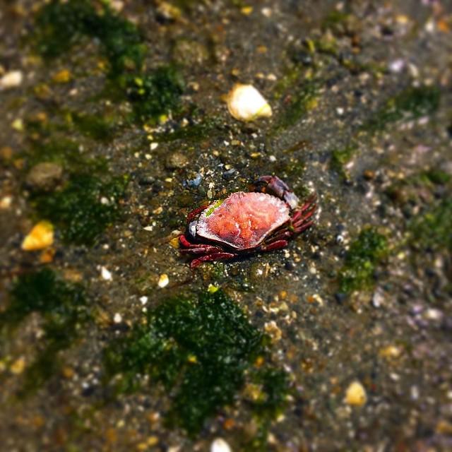 Crab, anyone?