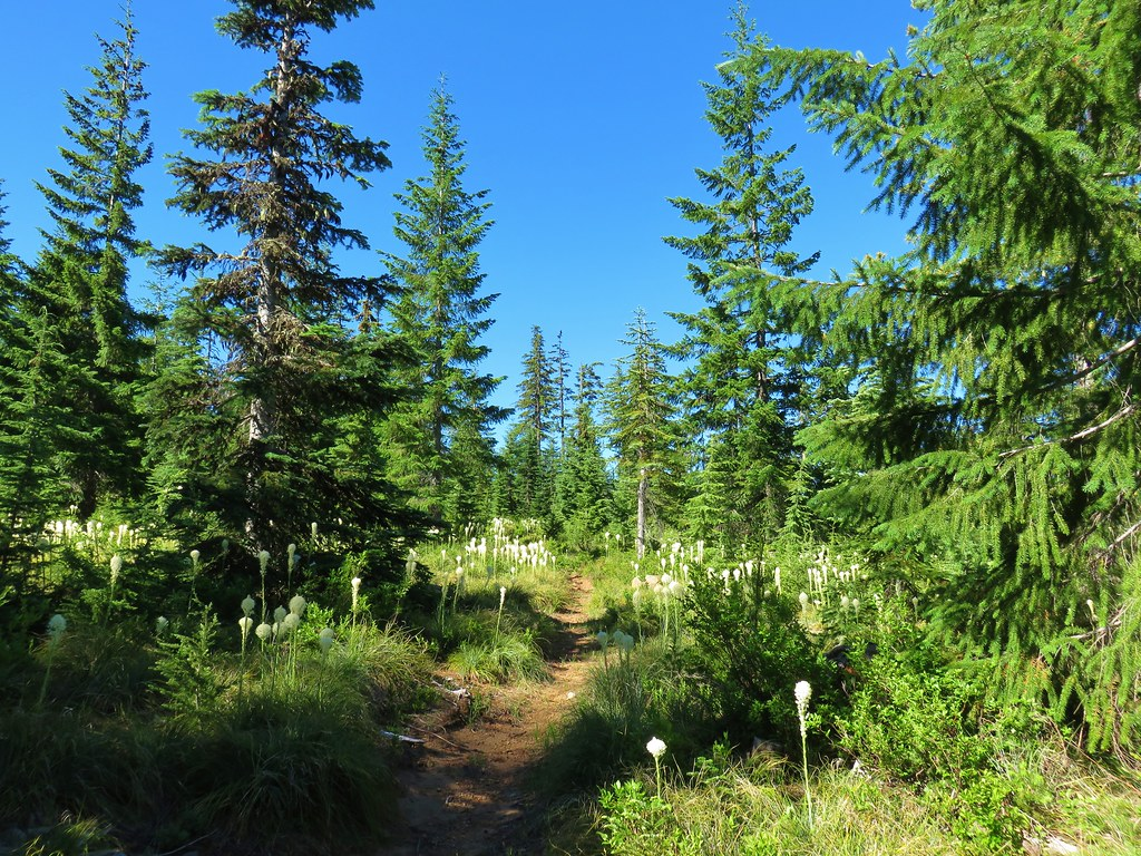 Rho Ridge Trail