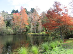 Autumn at Virginia Lake