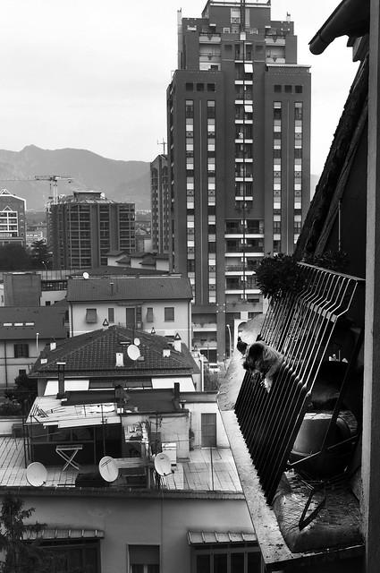 Animals & the city I, Nikon D90, AF-S DX Zoom-Nikkor 18-70mm f/3.5-4.5G IF-ED