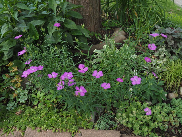 Récolte des semences, plante par plante - Page 2 35452679440_03258aace2_z