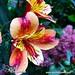 Goodmorning! www.SpecialFlowers.info by specialflowers.info