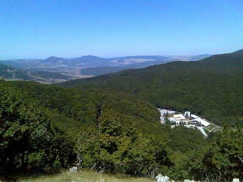 Mount Sacro trees