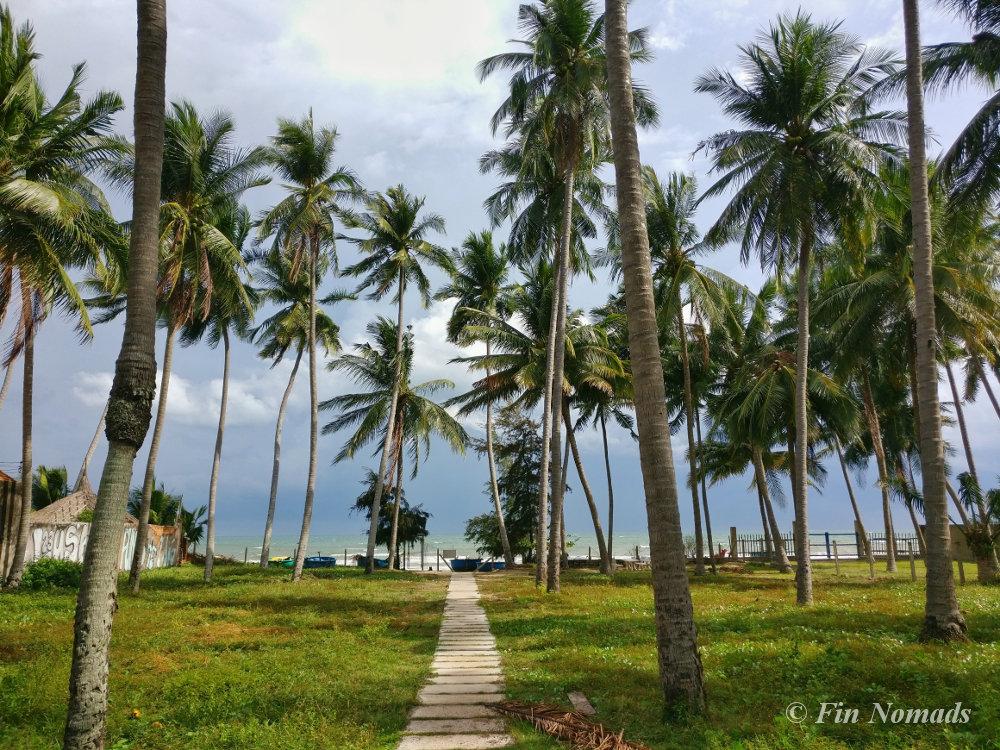 muine-beach-palms