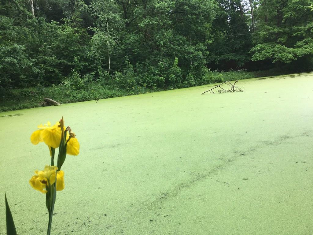 Желтое на зеленом