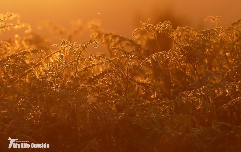 P1090546 - Sunset