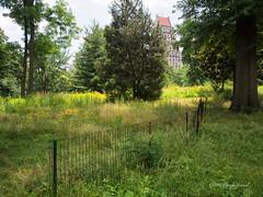 A Native Meadow in Manhattan