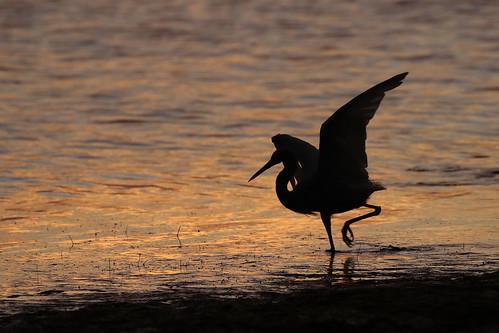 ft desoto wildlife nature bird sunset florida gulf