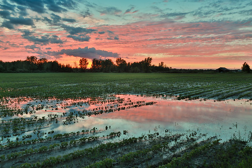 canoneos5dmarkiv midland midlandcounty michigan mi flood puddle field campo sunset puestadelsol soybean summer rainstorm trees wet reflection clouds cielo hdr canon flooded