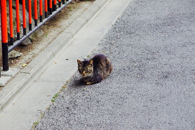 Today's Cat@2017-06-25