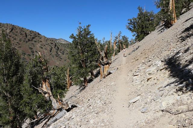 2751 Steep-sided canyon on the Methuselah Trail