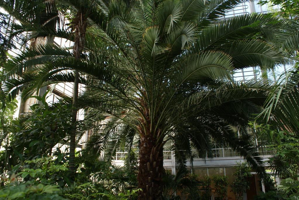 Dans les serres tropicales du jardin botanique de Riga.