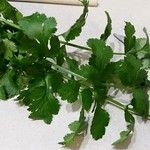 Coriander for the burritos