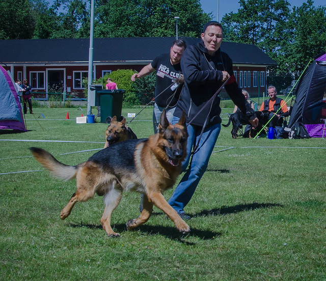 German shepherd and handler at the dog show