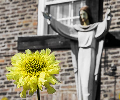 Flower and Jesus. Hedon Catholic Church.