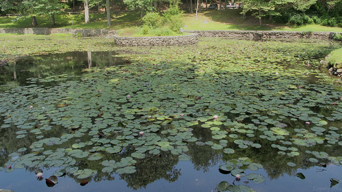 Gillette Castle Lily Pond Reflecting Blue Sky