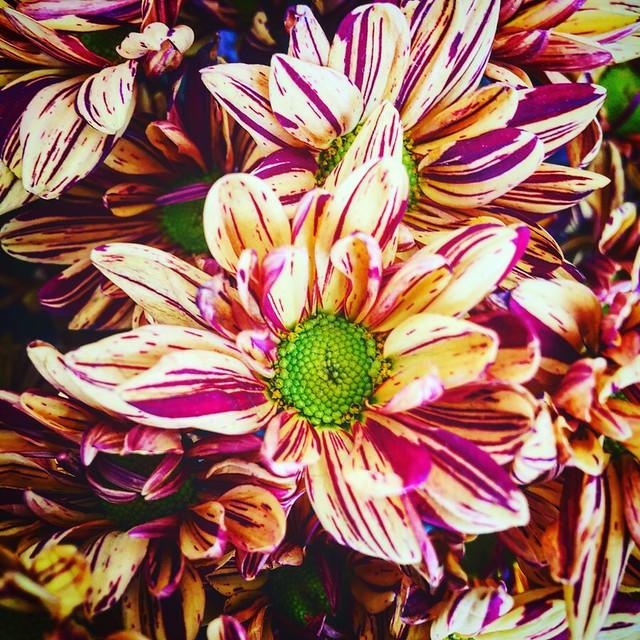 Flower, Apple iPhone 6 Plus, iPhone 6 Plus back camera 4.15mm f/2.2