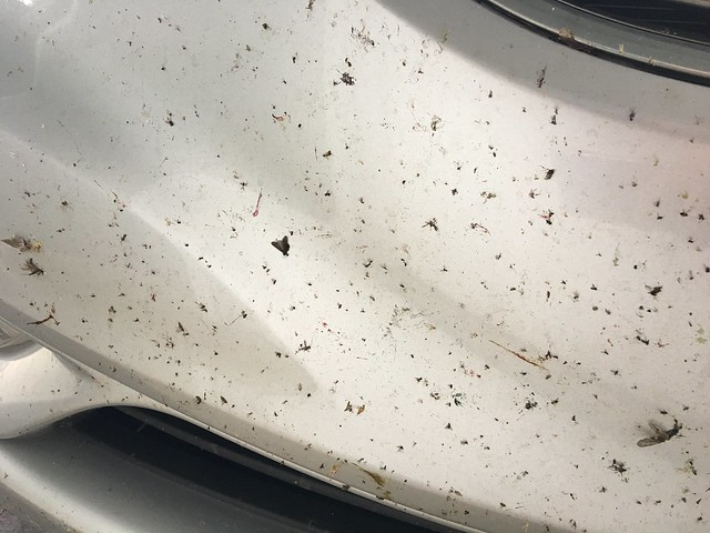Bugs on my bumper