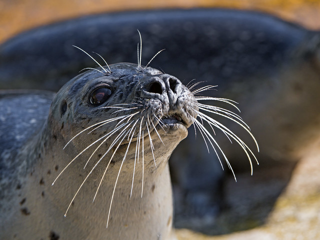 Last seal picture