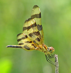 Halloween pennant blowing in the wind