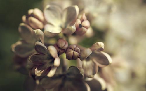 montreal spring flora nature plant flower blossom sunset light akigabo life canon t5i 700d garden pink white