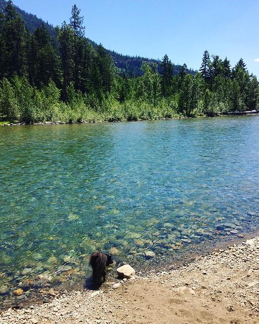 Bear Cub at the river's edge. 💦