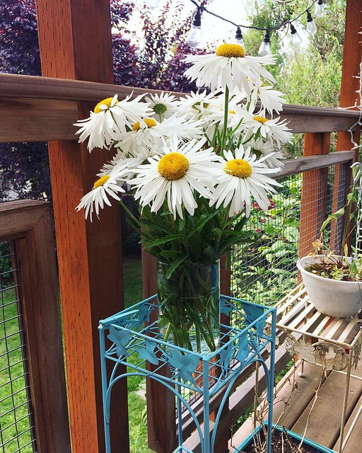 I cut some daisies from the yard, but they were so stinky I had to put them outside! Who knew.