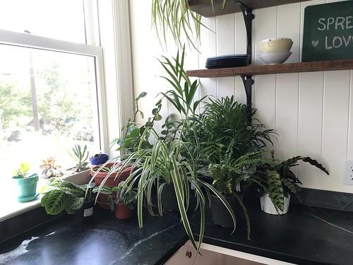Houseplant Haul