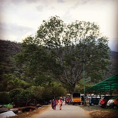 Tree just that big tree on the walkway can make it so pleasant for anyone who walks on this road. #tree #shade #eveningwalk