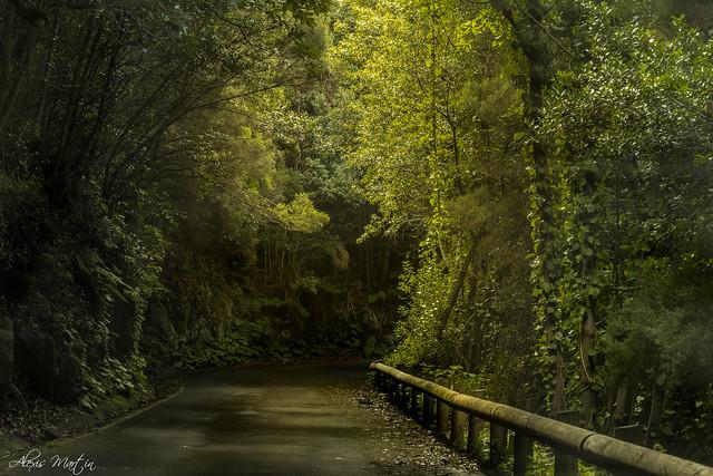 Camino Jurassic World