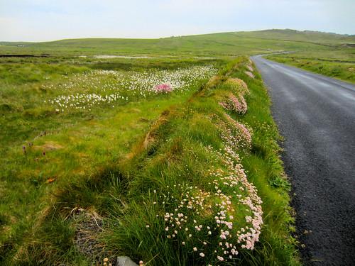 ireland éire eire clare anclár wildatlanticway loophead drive spring ocean sea
