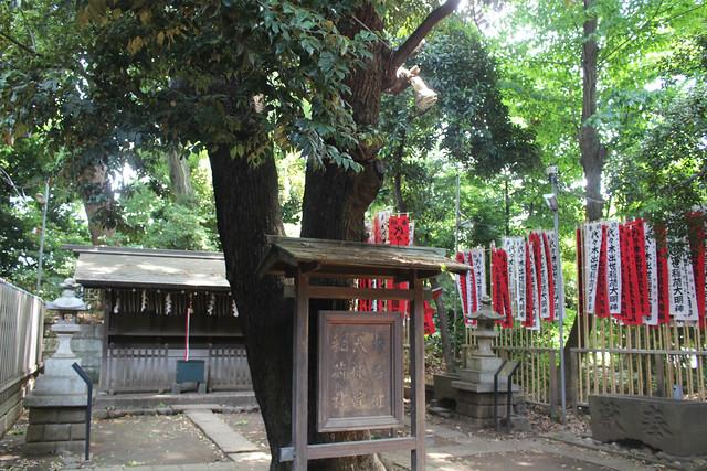 yoyogihachimangu35