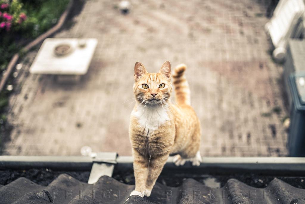 Stalker on the Roof