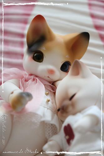 ✰ Ma famille de kitsune (p. 20) - Page 12 35598309216_266ae013da