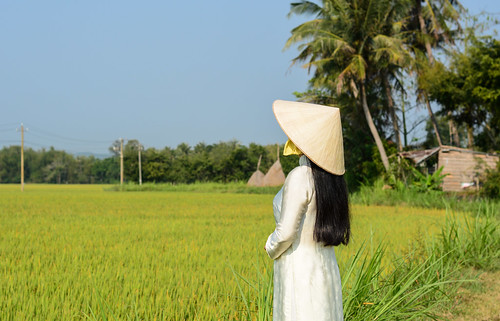 Vietnamese woman standing on the rice field