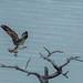 Osprey Nest-128.jpg