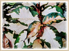 Graptophyllum pictum 'Aurea Variegata' (Caricature Plant, Jamaican Croton))