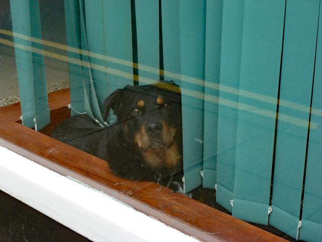 Dog in the Window, Panasonic DMC-TZ18