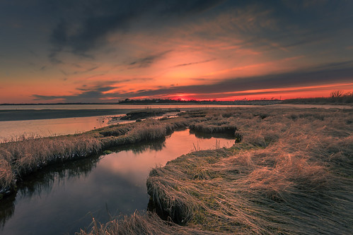 marsh tideland tidalpool brooklyn
