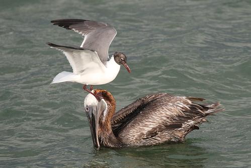 ft desoto park stpete fl florida wildlife nature bird 7dm2 canon